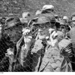 Belgrad, Erfassung von Juden